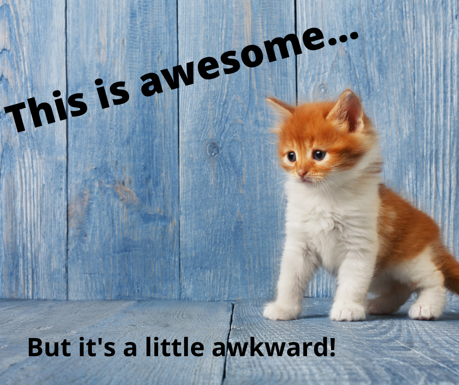 nervous kitten: this is awesome ... but it's a little awkward!